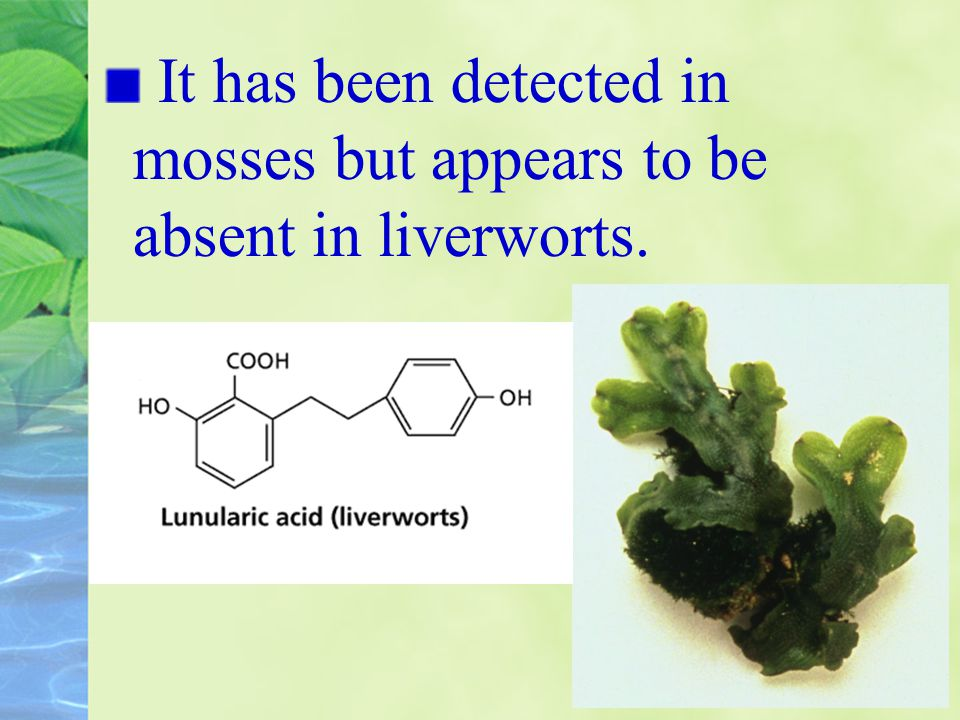It has been detected in mosses but appears to be absent in liverworts.