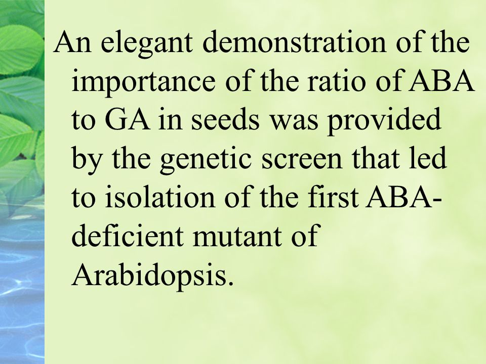 An elegant demonstration of the importance of the ratio of ABA to GA in seeds was provided by the genetic screen that led to isolation of the first ABA-deficient mutant of Arabidopsis.