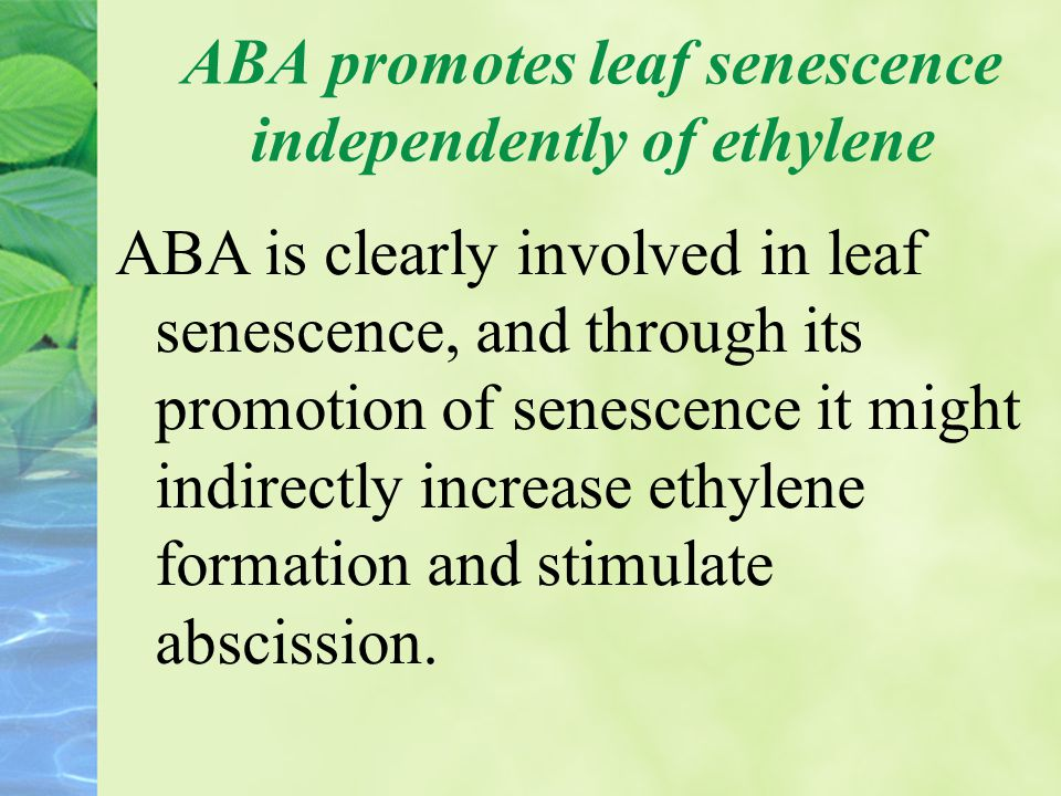 ABA promotes leaf senescence independently of ethylene