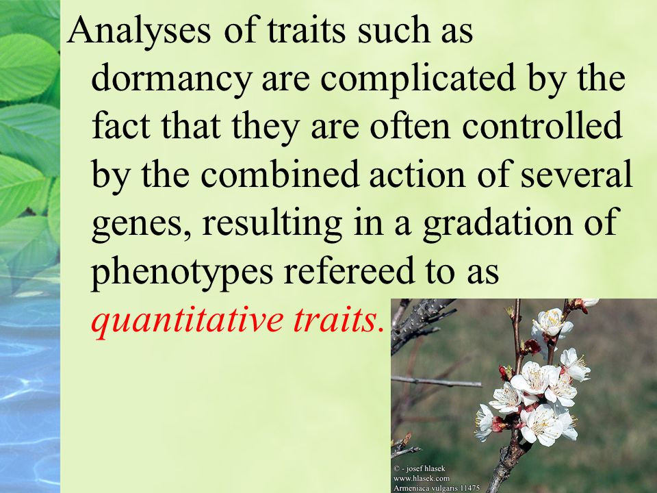 Analyses of traits such as dormancy are complicated by the fact that they are often controlled by the combined action of several genes, resulting in a gradation of phenotypes refereed to as quantitative traits.