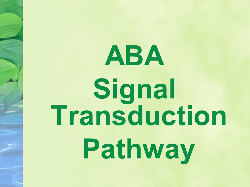 ABA Signal Transduction Pathway