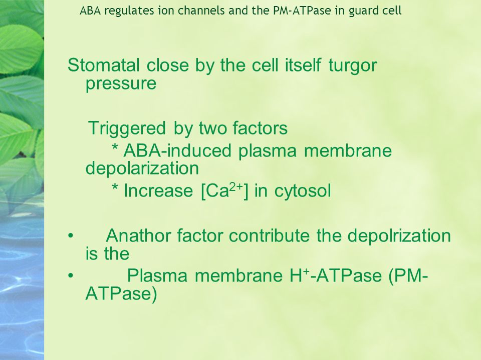 ABA regulates ion channels and the PM-ATPase in guard cell