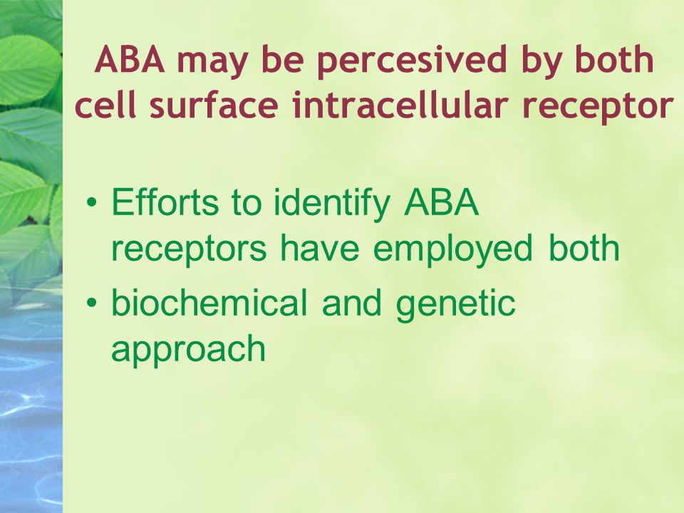 ABA may be percesived by both cell surface intracellular receptor