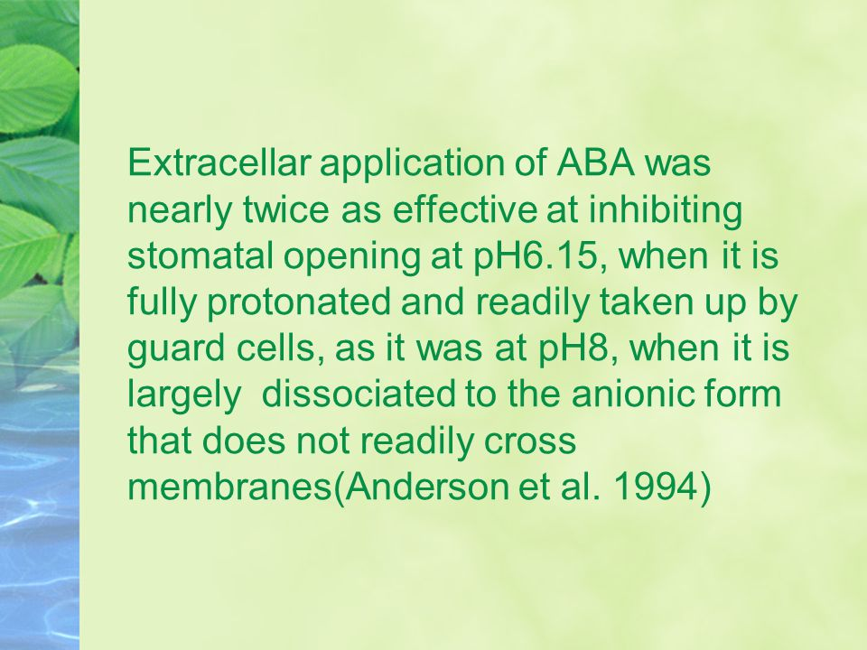 Extracellar application of ABA was nearly twice as effective at inhibiting stomatal opening at pH6.15, when it is fully protonated and readily taken up by guard cells, as it was at pH8, when it is largely dissociated to the anionic form that does not readily cross membranes(Anderson et al.