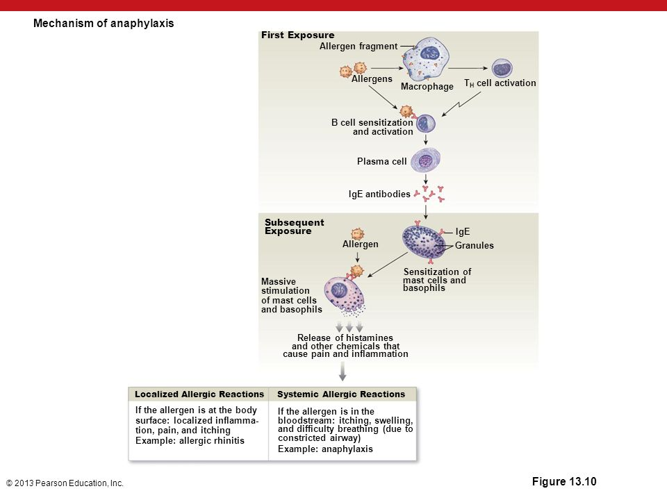 Mechanism of anaphylaxis