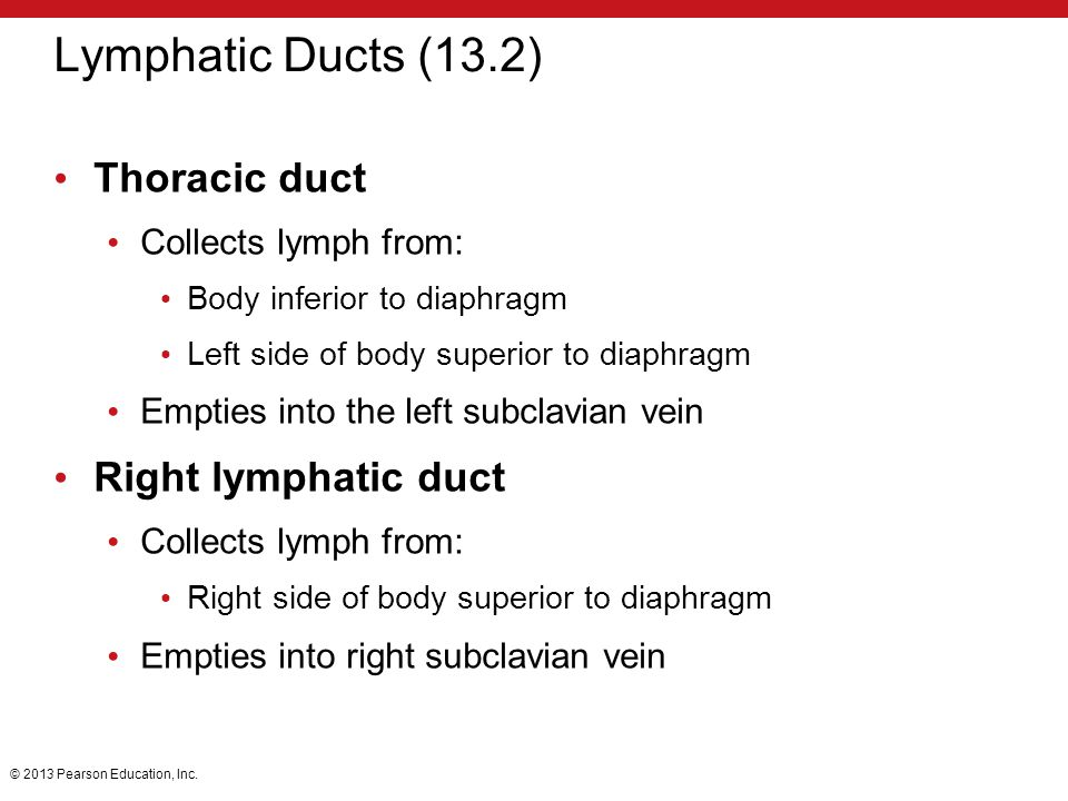 Lymphatic Ducts (13.2) Thoracic duct Right lymphatic duct