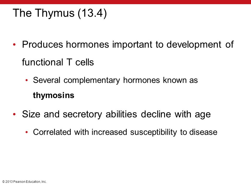 The Thymus (13.4) Produces hormones important to development of functional T cells. Several complementary hormones known as thymosins.