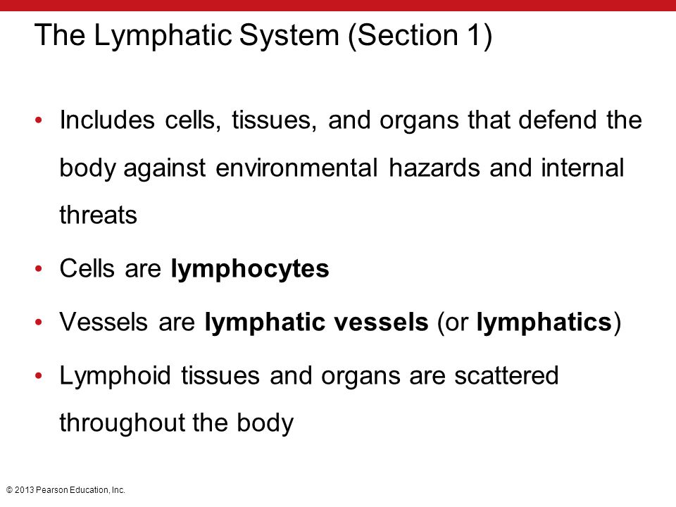 The Lymphatic System (Section 1)