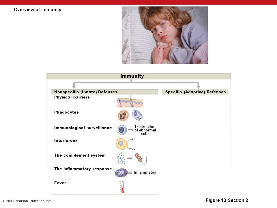 Module 13 Section 2 Nonspecific Immunity