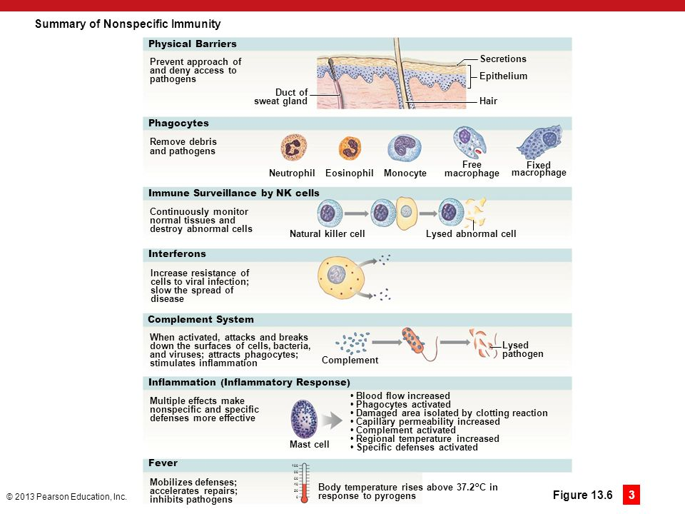 Summary of Nonspecific Immunity