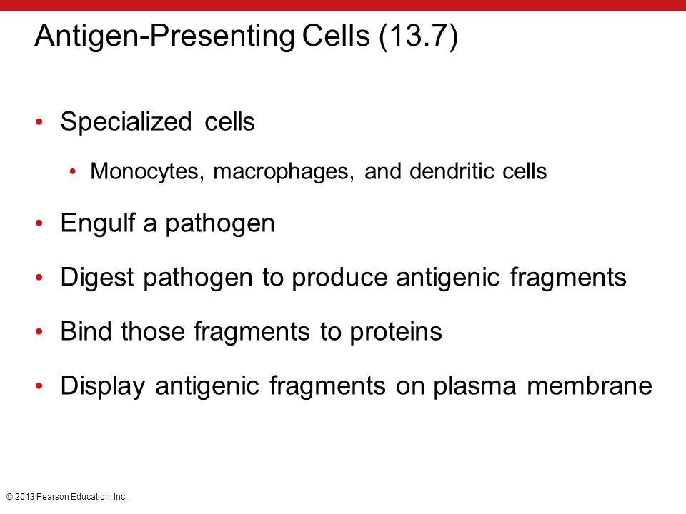 Antigen-Presenting Cells (13.7)
