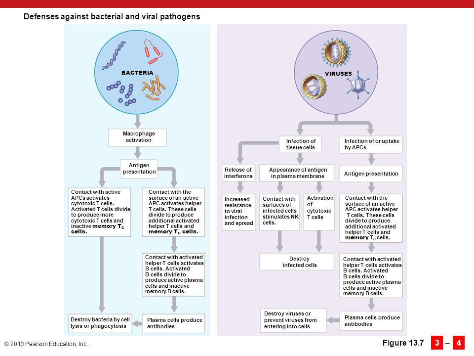 Defenses against bacterial and viral pathogens