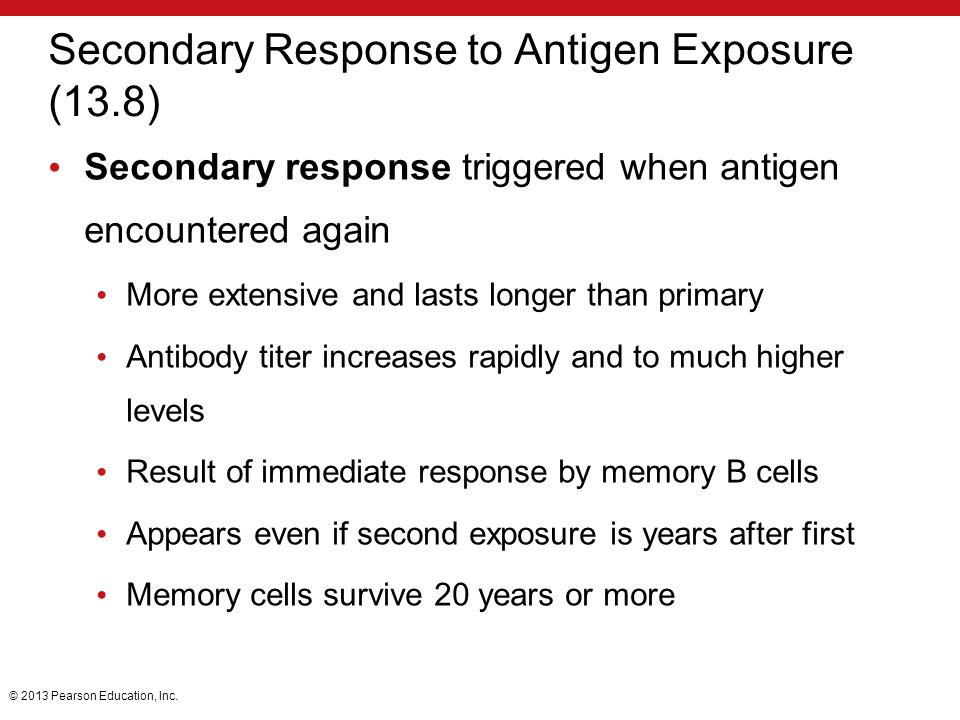 Secondary Response to Antigen Exposure (13.8)