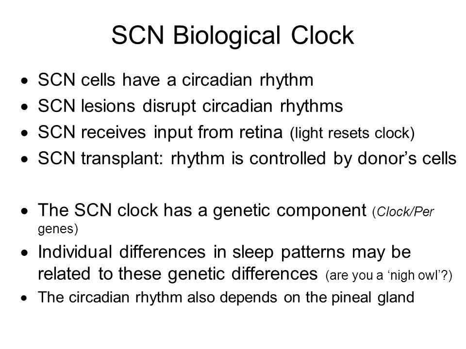 SCN Biological Clock SCN cells have a circadian rhythm