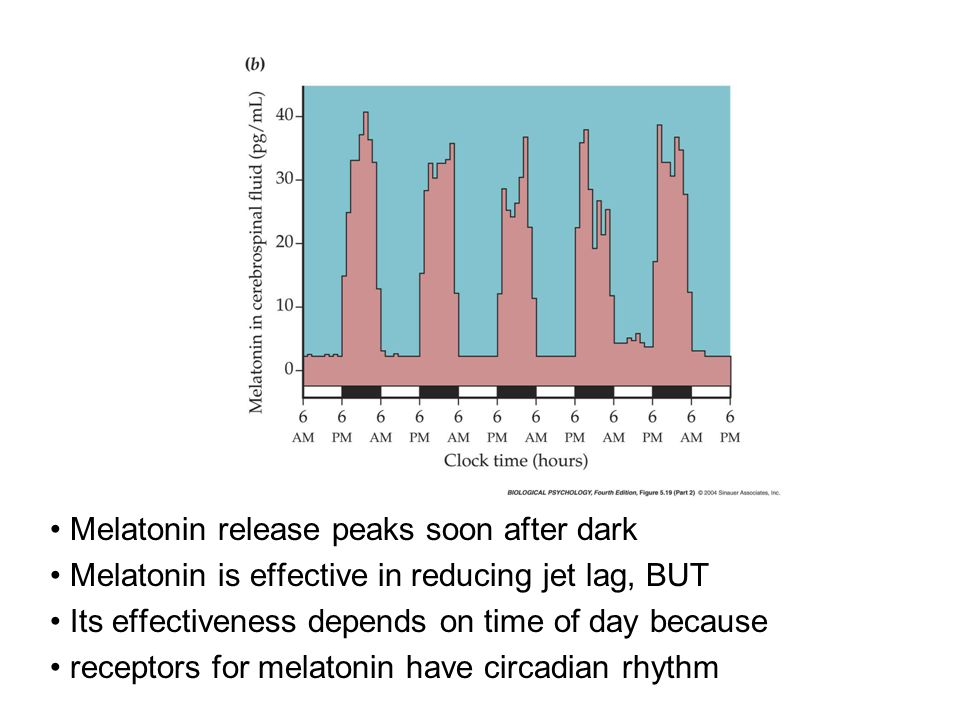 Melatonin release peaks soon after dark