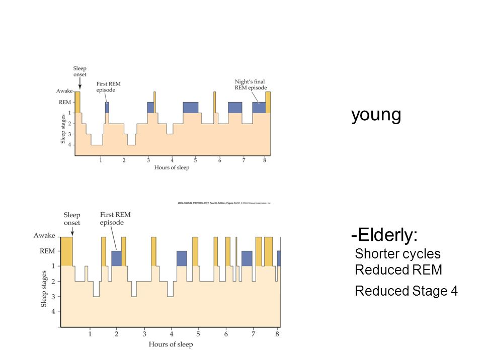 young Elderly: Shorter cycles Reduced REM Reduced Stage 4