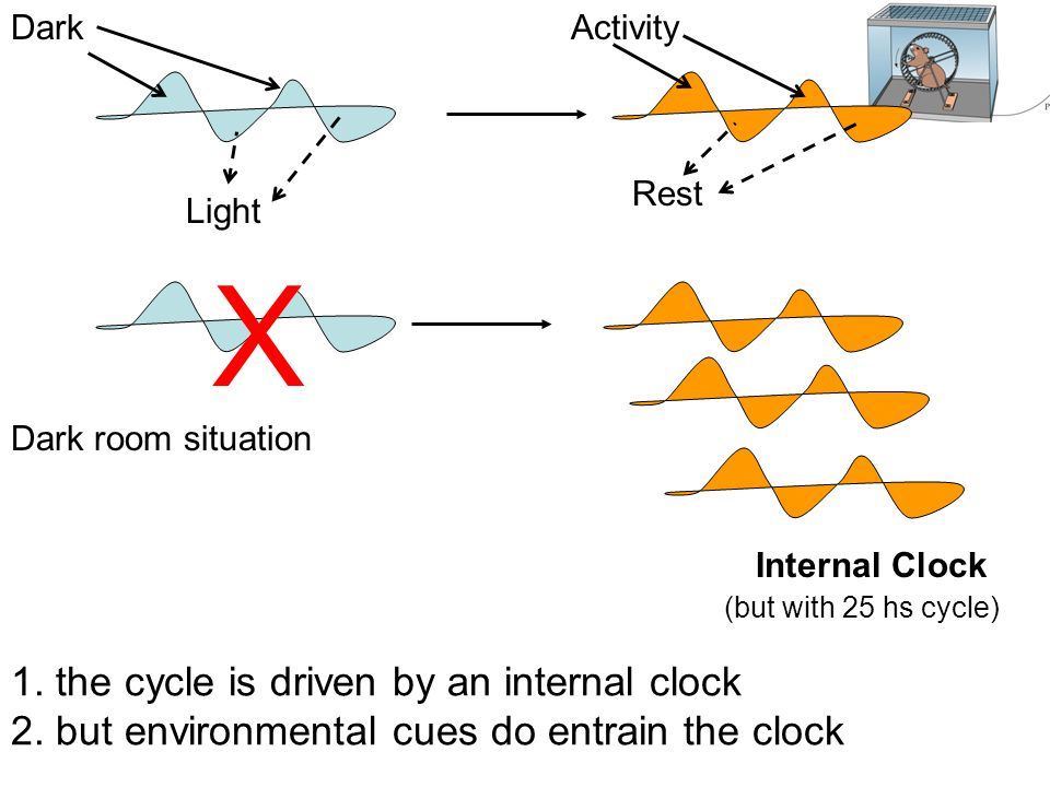 X 1. the cycle is driven by an internal clock