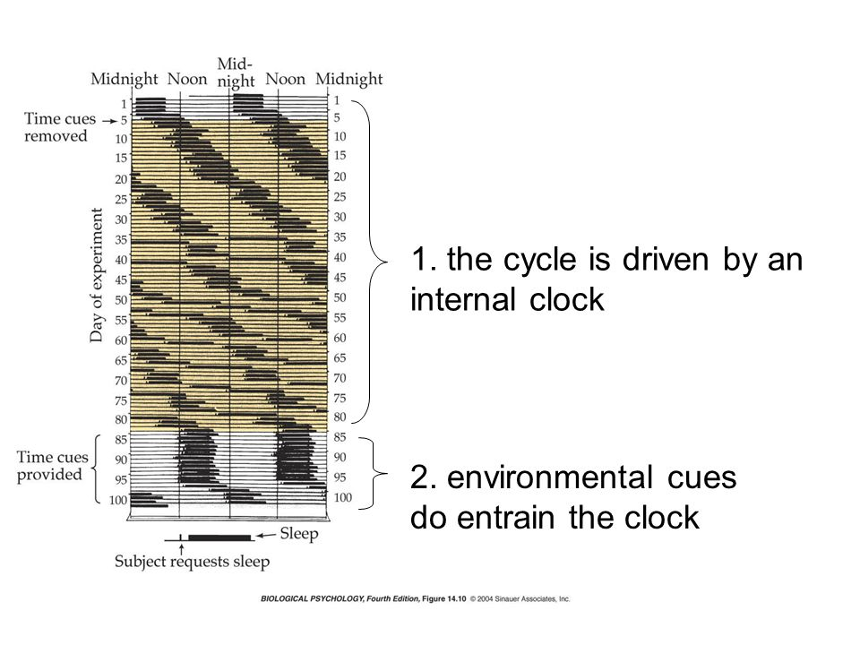 1. the cycle is driven by an internal clock