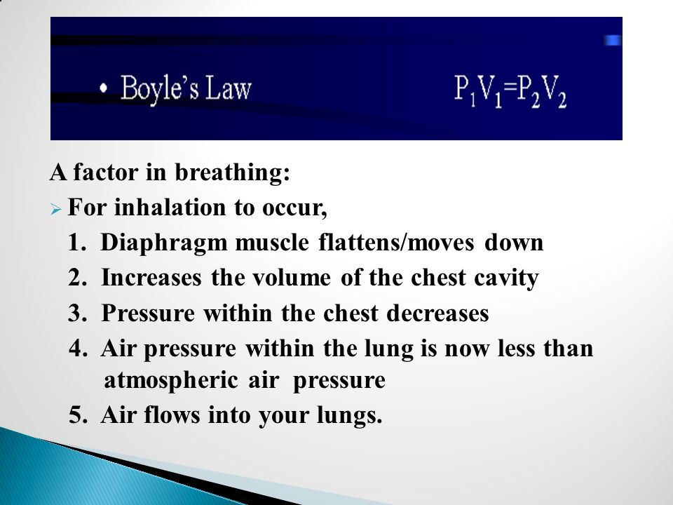 A factor in breathing: For inhalation to occur, 1. Diaphragm muscle flattens/moves down. 2. Increases the volume of the chest cavity.
