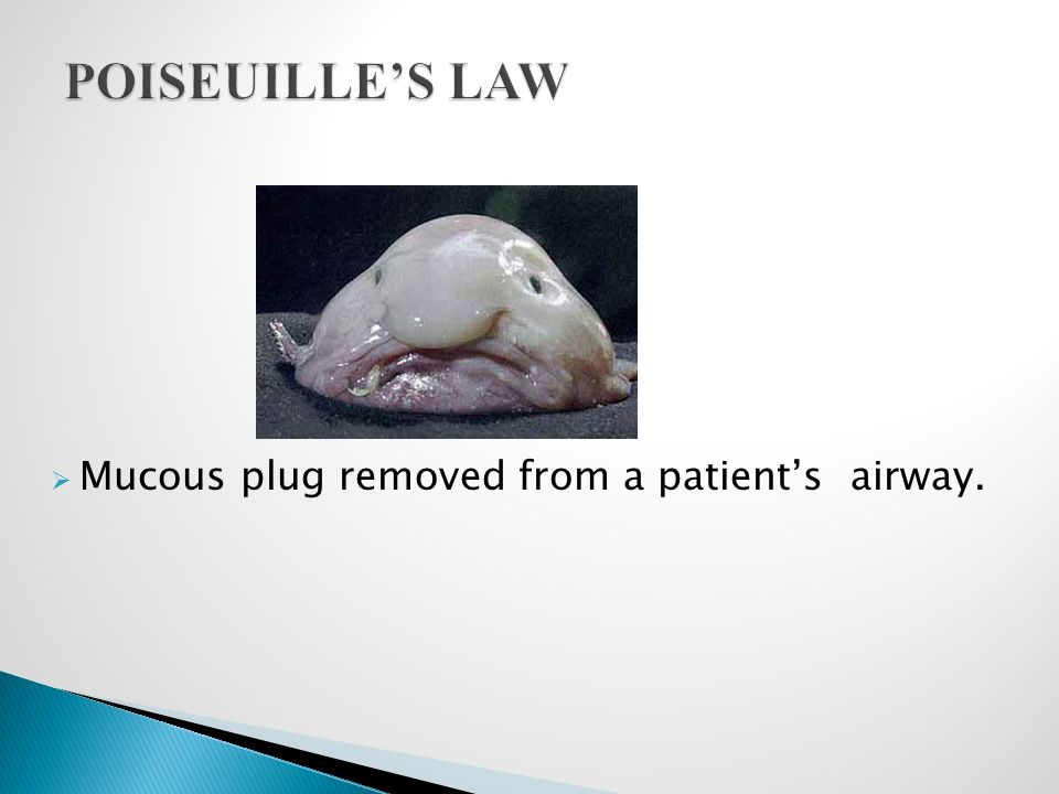 POISEUILLE'S LAW Mucous plug removed from a patient's airway.
