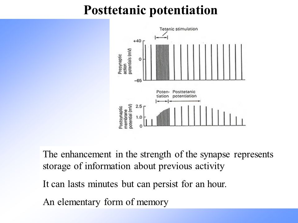 Posttetanic potentiation
