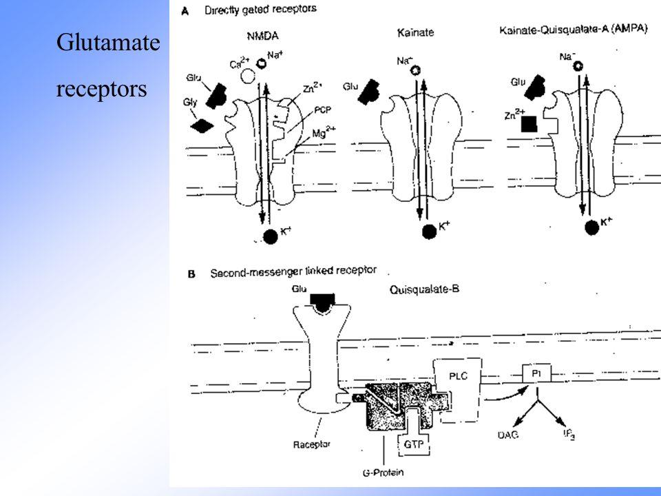 Glutamate receptors