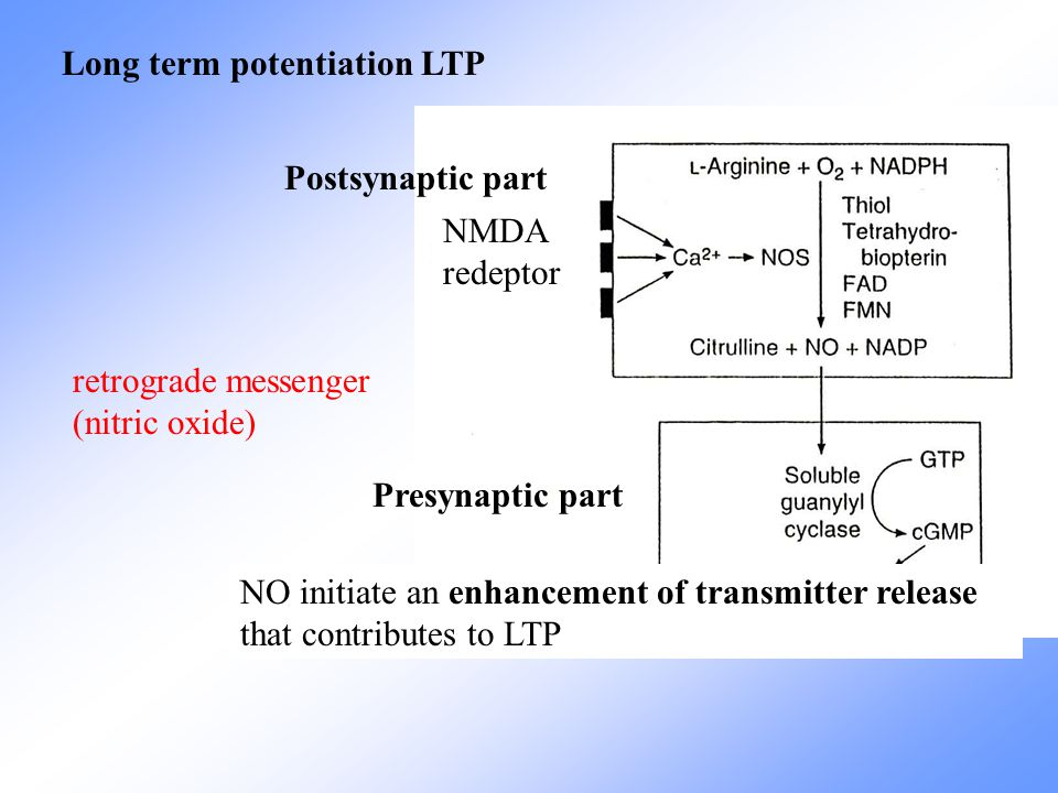 Long term potentiation LTP