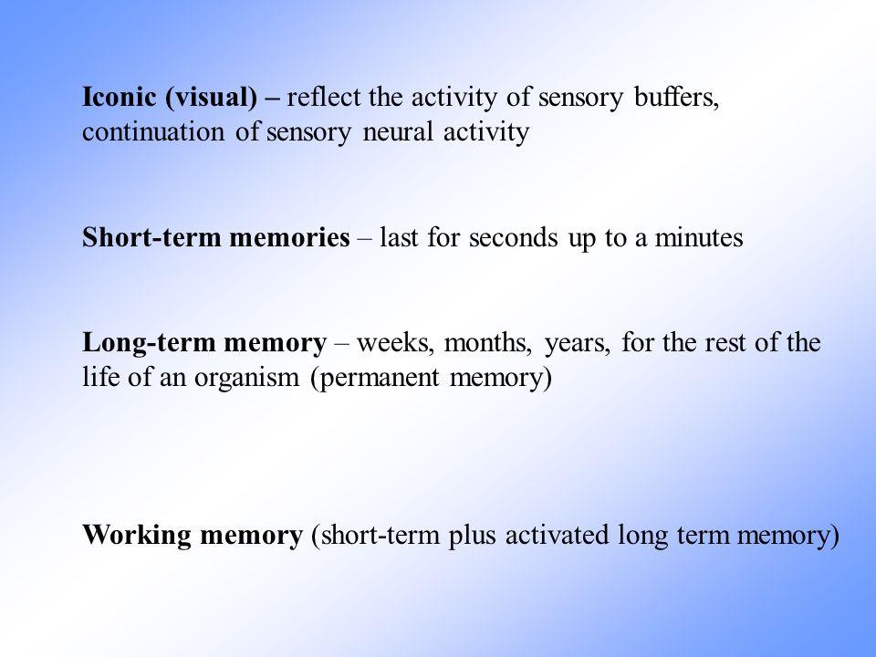 Iconic (visual) – reflect the activity of sensory buffers, continuation of sensory neural activity