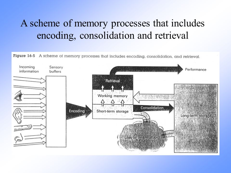 A scheme of memory processes that includes encoding, consolidation and retrieval