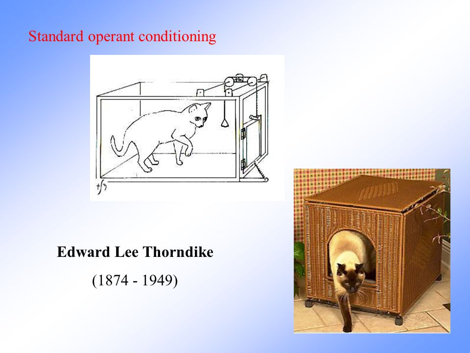 Standard operant conditioning