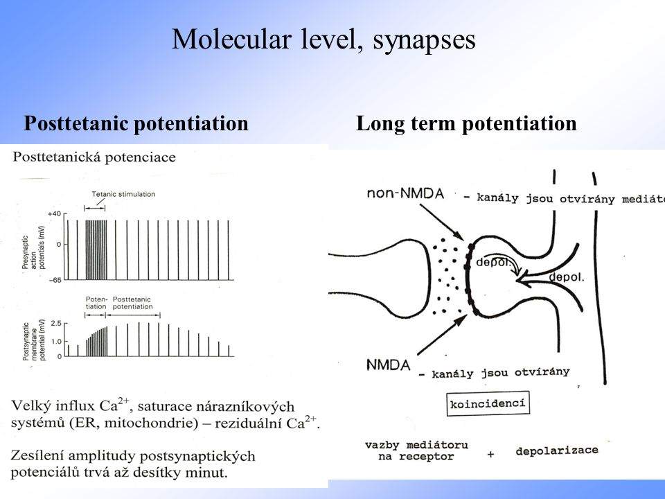 Molecular level, synapses