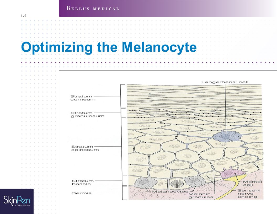Optimizing the Melanocyte