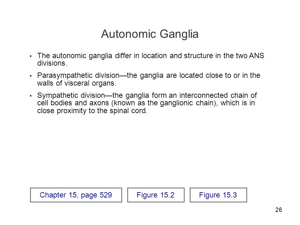 Autonomic Ganglia The autonomic ganglia differ in location and structure in the two ANS divisions.