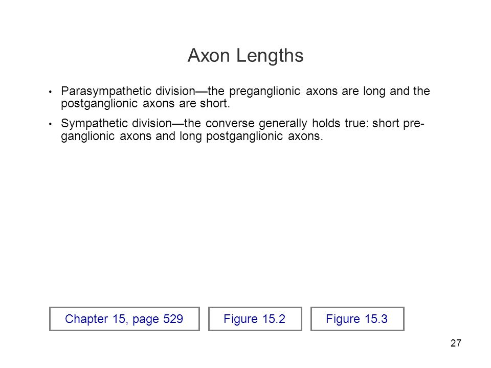 Axon Lengths Parasympathetic division—the preganglionic axons are long and the postganglionic axons are short.