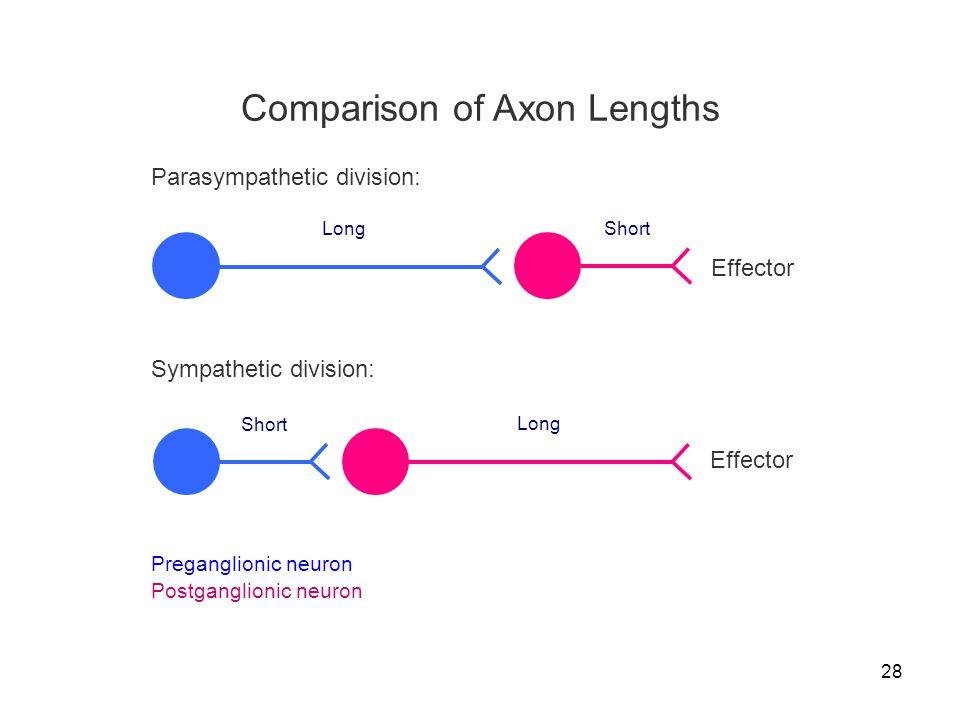 Comparison of Axon Lengths