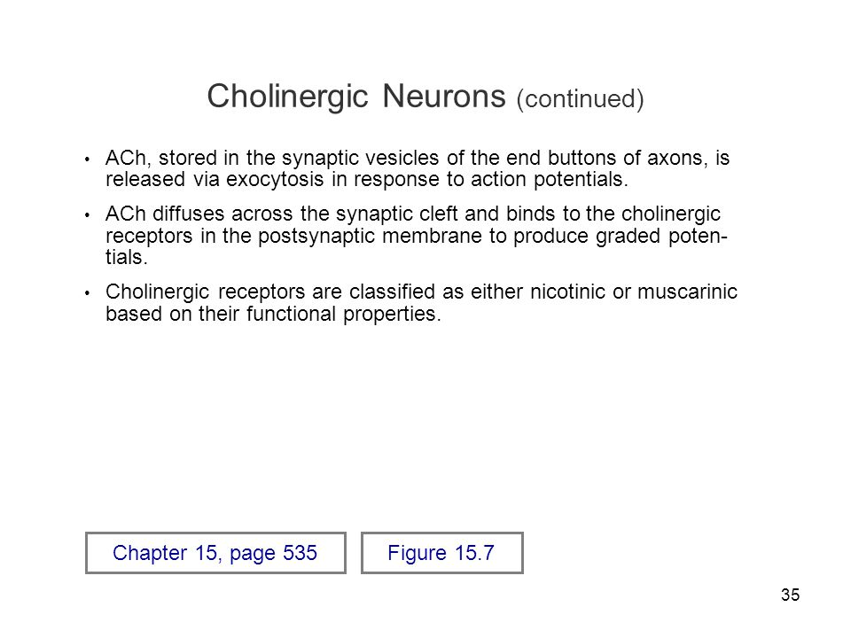 Cholinergic Neurons (continued)