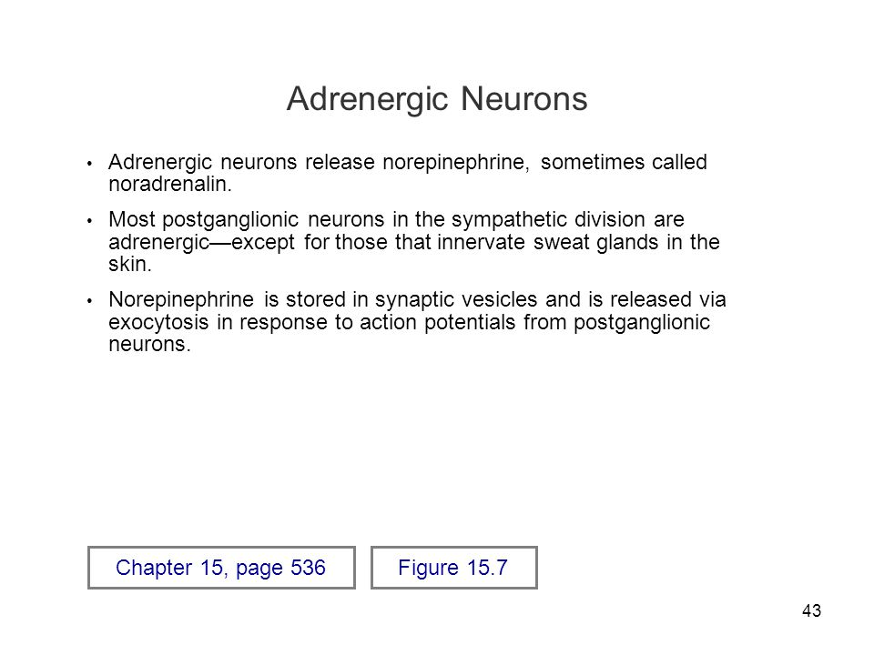 Adrenergic Neurons Adrenergic neurons release norepinephrine, sometimes called noradrenalin.
