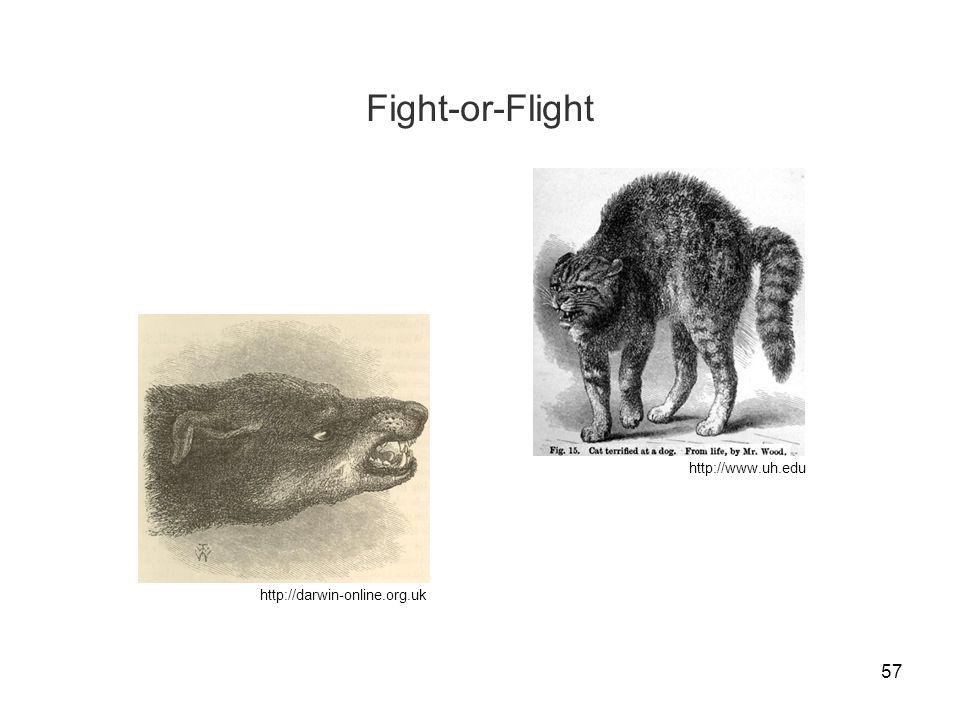 Fight-or-Flight http://www.uh.edu http://darwin-online.org.uk