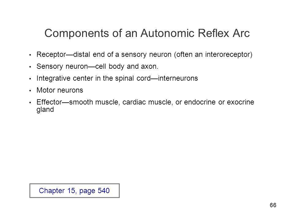 Components of an Autonomic Reflex Arc