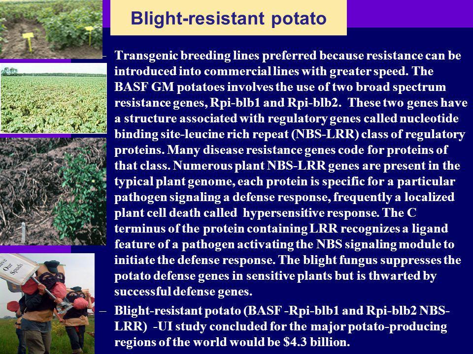 Blight-resistant potato