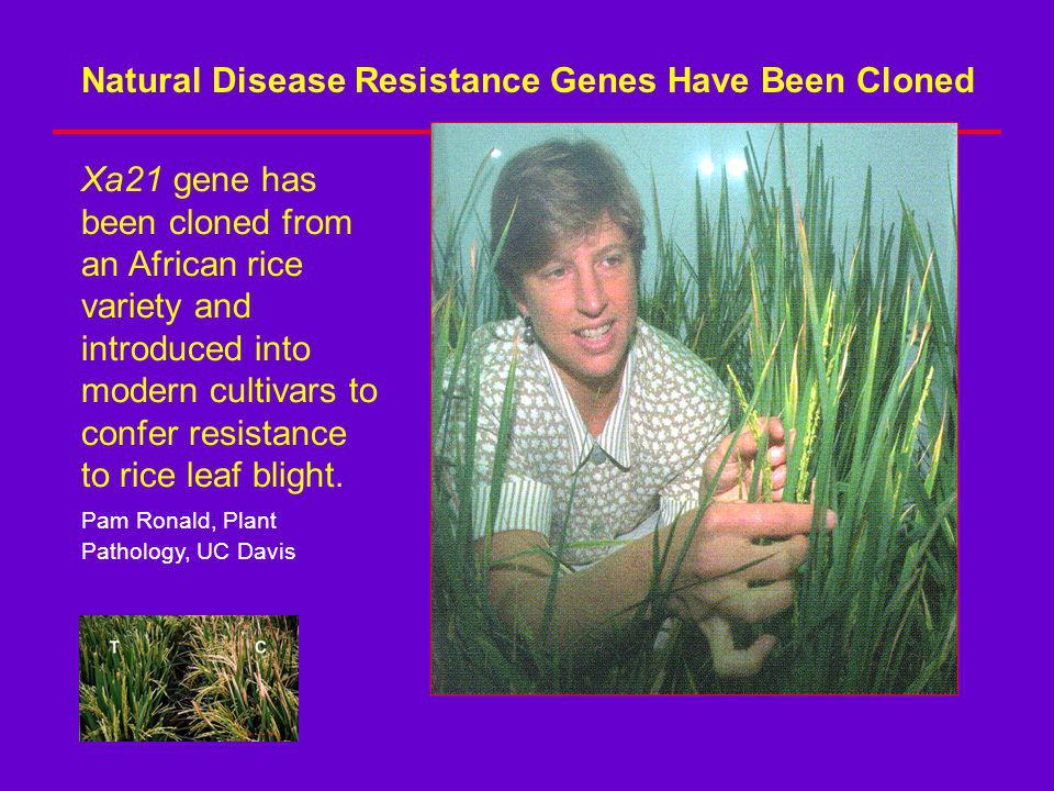Natural Disease Resistance Genes Have Been Cloned