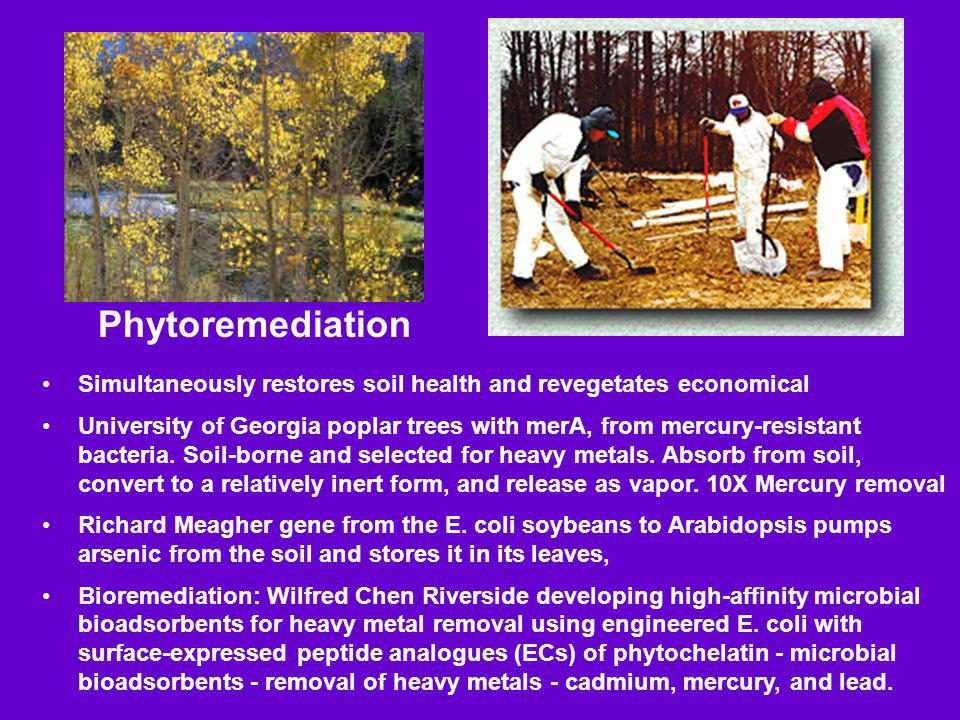 Phytoremediation Simultaneously restores soil health and revegetates economical.