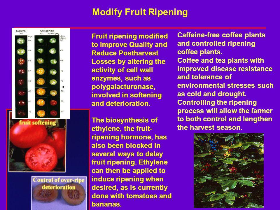 Modify Fruit Ripening