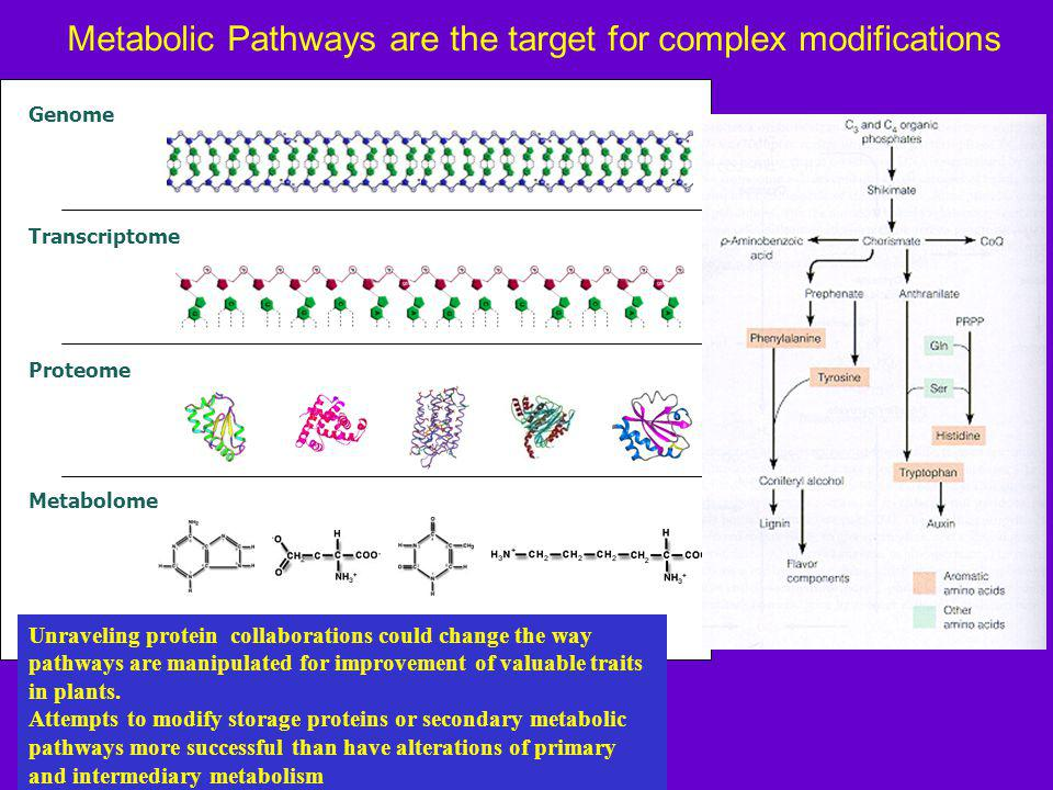 Metabolic Pathways are the target for complex modifications