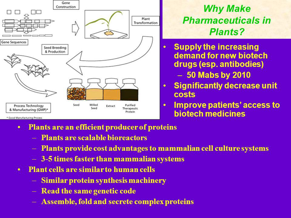 Why Make Pharmaceuticals in Plants