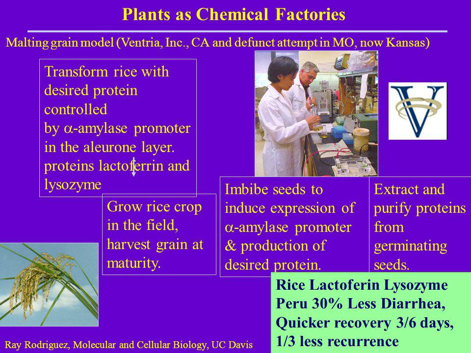 Plants as Chemical Factories
