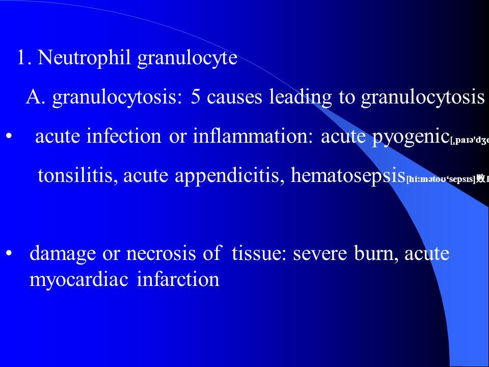 1. Neutrophil granulocyte