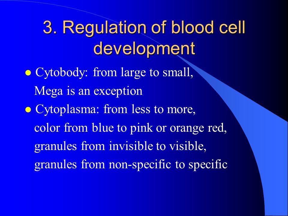 3. Regulation of blood cell development