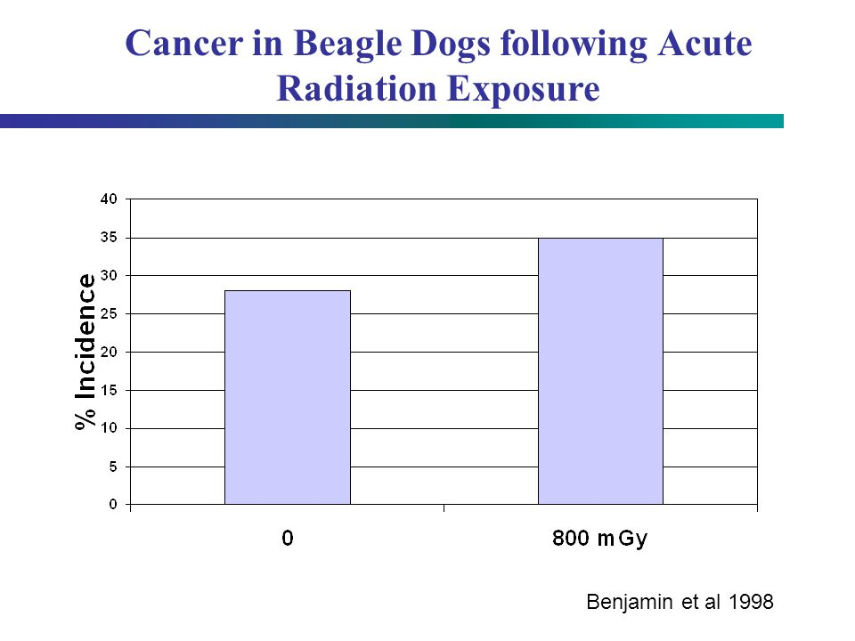 Cancer in Beagle Dogs following Acute Radiation Exposure