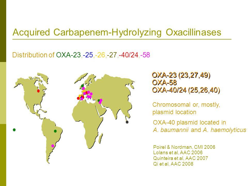 Acquired Carbapenem-Hydrolyzing Oxacillinases